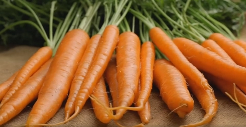 3_Полезная программа_морковь (2)